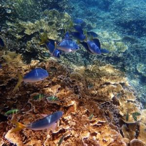 サンゴ礁 海洋生物